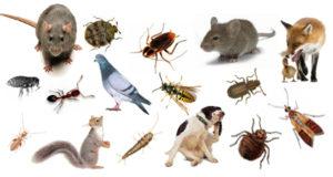 شركة المثالية لمكافحة الحشرات